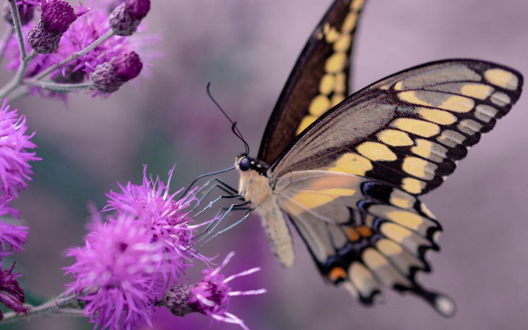 """""""Primeiro somos a lagarta que se arrasta e depois a borboleta que se liberta e voa."""""""